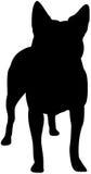 Silhouette australienne de crabot de bétail Images stock