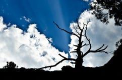 Silhouette av den vissna treen i bakgrundsskyen Fotografering för Bildbyråer