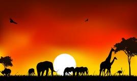 Silhouette av djurdjurlivet Royaltyfri Illustrationer