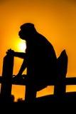 Silhouette av en apa Royaltyfri Bild
