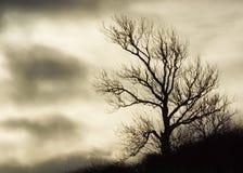 Silhouette av en Tree Arkivfoto