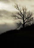 Silhouette av en Tree Royaltyfria Foton