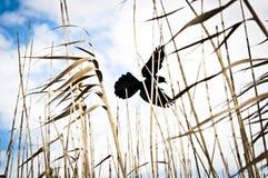 Silhouette av ett fågelflyg Arkivfoto
