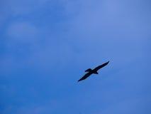 Silhouette av fågeln Arkivfoto