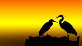 Silhouette av fågeln Arkivbild