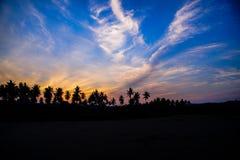Silhouette av kokosnöttreen royaltyfria bilder