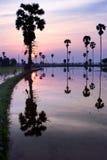 Silhouette av sockerpalmträdet på reflexion Royaltyfria Foton