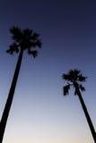 Silhouette av sockerpalmträdet på solnedgångskyen Arkivbild