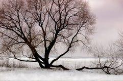 Silhouette av treen Fotografering för Bildbyråer