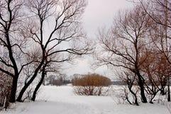 Silhouette av treen Royaltyfria Foton