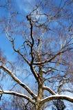 Silhouette av treen Royaltyfri Foto