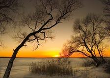 Silhouette av trees Arkivbilder