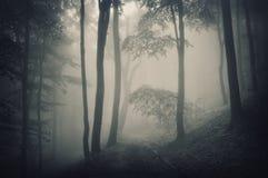 Silhouette av trees i en skog med dimma royaltyfri bild