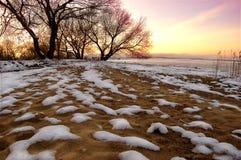 Silhouette av treesna Arkivfoton