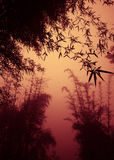 Silhouette Bamboo Forest as Dusk Concept Stock Photos