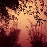 Silhouette Bamboo Forest China Environment Concept Stock Image