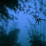 Silhouette Bamboo Forest China Environment Concept Royalty Free Stock Photography