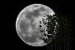 Silhouette Bamboo shadow eclipsed the moon Stock Image
