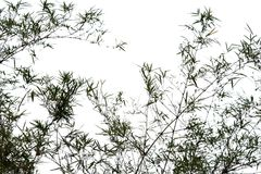 Silhouette of bamboo. On white background Royalty Free Stock Photos