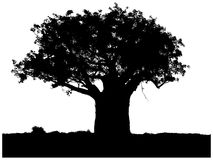 Silhouette of a baobab Stock Photography
