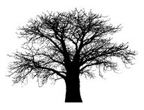 Silhouette of a baobab tree. Isolated on white background Royalty Free Stock Images