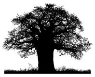 Silhouette of a baobab tree. Isolated on white background Stock Image