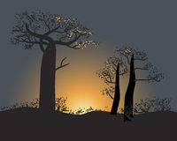Silhouette of baobabs on a sunset sky scene in nature of Madagascar Royalty Free Stock Images