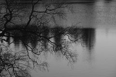 The silhouette of bare branches of a tree in front of a forest lake. Sentimental monochrome landscape, black-and-white photography stock photo