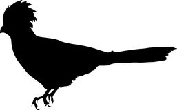 Silhouette of a bare-faced  go-away bird. Silhouette of a bare-faced go-away bird - digitally hand drawn vector silhouette, black isolated on white background Stock Image