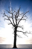 Silhouette of bare tree Stock Image