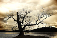Silhouette of bare tree Stock Photography
