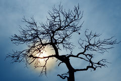 Silhouette of bare tree Royalty Free Stock Photos