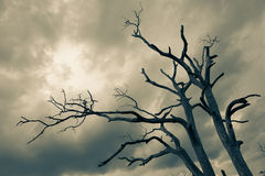 Silhouette of bare tree Stock Photo