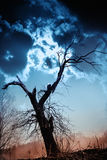 Silhouette of bare tree against dramatic sky Stock Photo