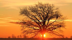 Silhouette Bare Tree Against Sky during Sunset Stock Photos