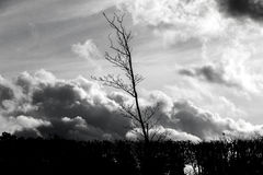 Silhouette of bare tree  in front of dramatic sky Royalty Free Stock Photography