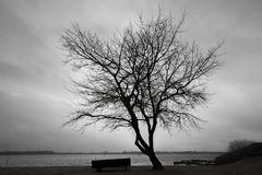 Silhouette of bare tree over dark cloudy sky. On a lake coast. Monochrome toned background photo Royalty Free Stock Images