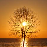 Silhouette of bare tree at sunrise Stock Photography