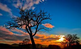 Silhouette of Bare Tree during Sunset Stock Photo