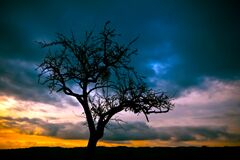 Silhouette of Bare Tree Under Dimmed Sky during Sunset Royalty Free Stock Photos