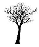 Silhouette of bare tree on a white background. Stock Photography