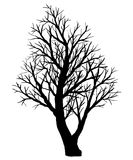 Silhouette of bare tree on a white background. Royalty Free Stock Images
