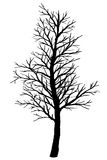 Silhouette of bare tree on a white background. Royalty Free Stock Photography