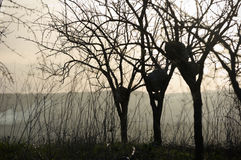 Silhouette Of Bare Trees At The Sunrise Royalty Free Stock Photo