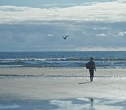 Silhouette Beach. Silhouette of girl walking at the beach with a bird in the background Stock Images