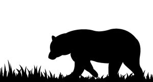 Silhouette of bear in the grass. Stock Images