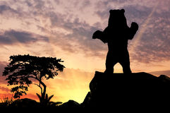 Silhouette bear on a hill Stock Photo