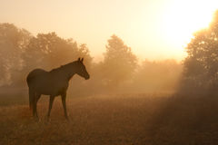 Silhouette of a beautiful Arabian horse Royalty Free Stock Photography