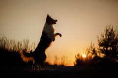 Dog silhouette at sunset Stock Image