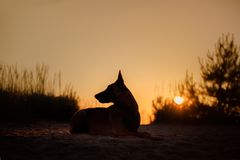 Dog silhouette at sunset Stock Images